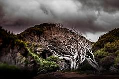 Spooky tree (Richard Mart1n) Tags: tree plant spooky awesome travel landscape landscapes australia nikon d5000