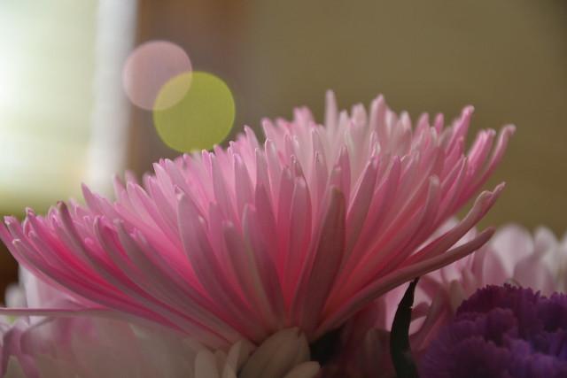 Flowers SOOC-1
