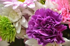 Flowers SOOC3