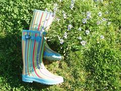 Campo (SMAC colours) Tags: flores garden casa country campo decoração cor móveis objectos showyourhouse inspirações