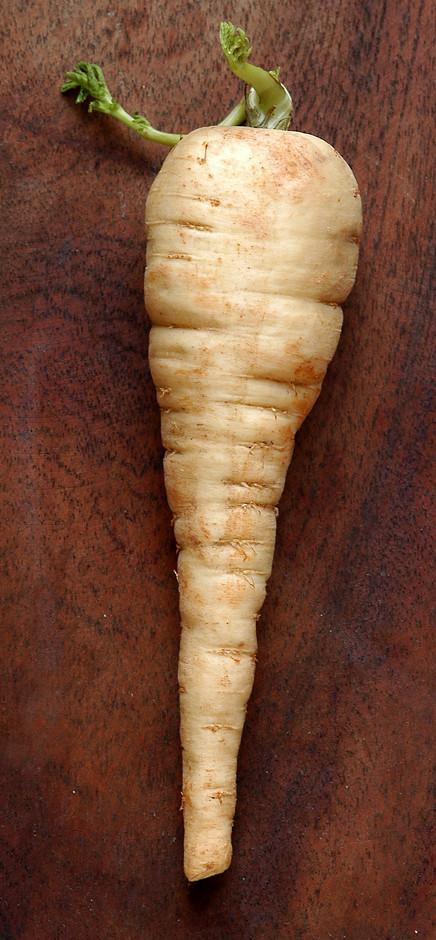 lowly parsnip