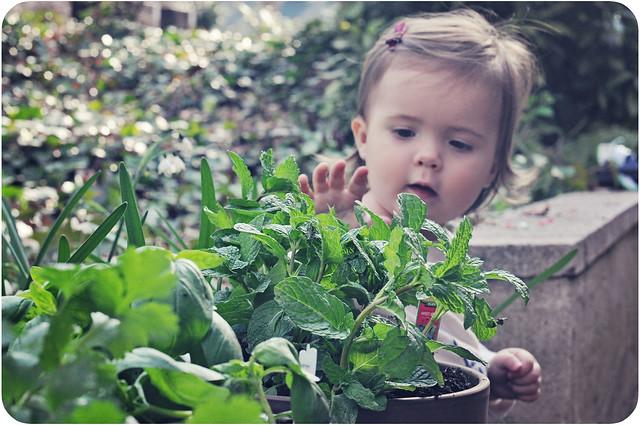 planting06