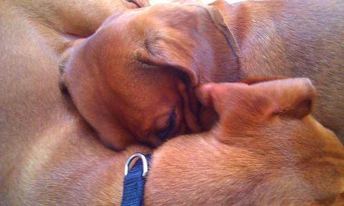 Cooper & Hazel Napping