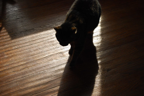 Creative Photography a Meditation - Cat on a hardwood floor