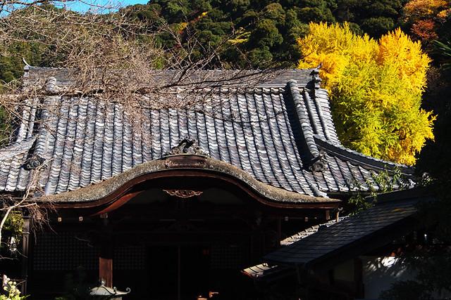20101119_102504_長谷寺