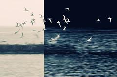 metamorphosis (Ąиđч) Tags: sky andy birds photoshop landscape fly flying andrea experiment andrew uccelli cielo reverse breakthrough paesaggio invert inversione volare volano benedetti esperiment d7000 ąиđч