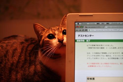 MacBook&GOMA