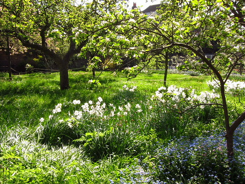 The Orchard Garden at Fenton House in Spring