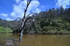 Frog Lake Photo