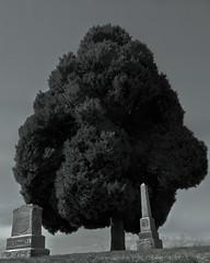 tumbas (Albacore08) Tags: canada tree cemetery graveyard vancouver arbol nikon scenery bc escenario cementerio burnaby tumbas tombs mausoleos mausoleums d90