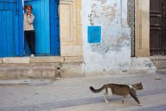 Cat. Kairouan, Tunisia (Maciej Dakowicz) Tags: africa city girl animal cat child tunisia maghreb medina historical streettunisia