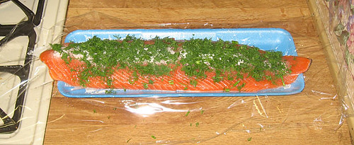 Gravlax in progress, topped with dill