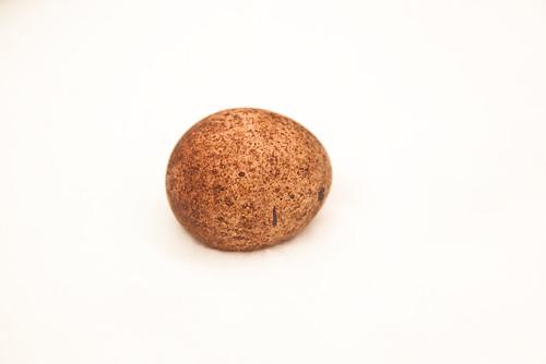 Peregrine falcon egg