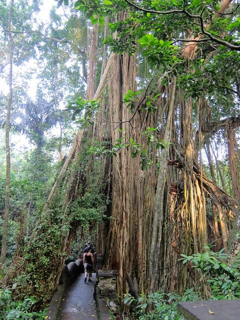 Extreme Trees