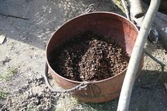 Faulbaumrinde nach dem Auskochen im Kessel -Wikinger Museum Haithabu WHH 09-04-2011