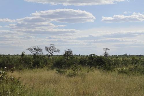 Kruger landscape