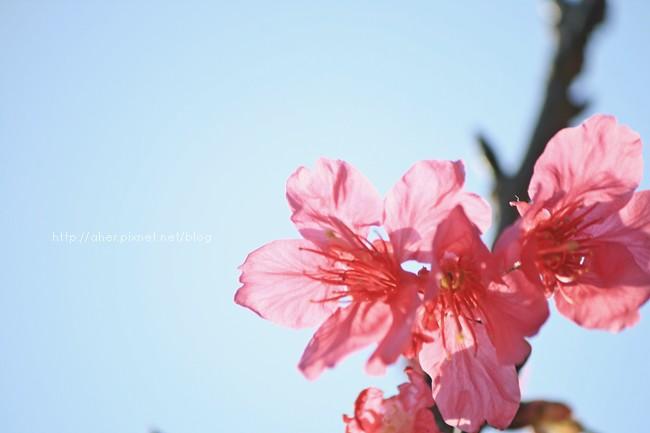 IMG_8681mm