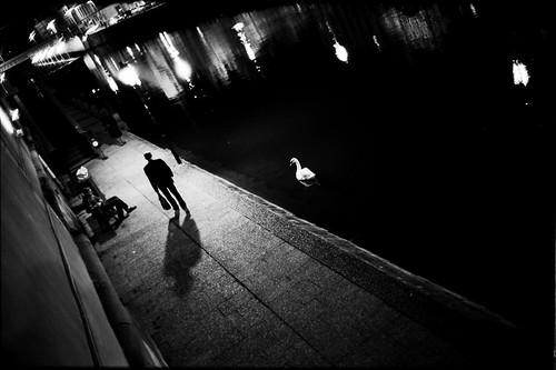 White swan nocturne (Yodamanu) street leica bw france swan voigtlander nb strasbourg alsace kodaktrix nocturne petitefrance voigtlnder berges leicam6 whiteswan noktonsc35mmf14 noktonsc3514 yodamanu manuelplantin whiteswannocturne