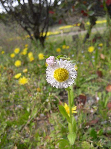春の花々@明日香村-19