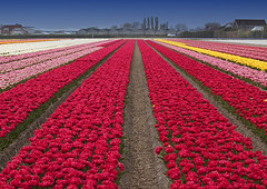 Colors Of Spring (DolliaSH) Tags: trip travel flowers holland color tourism colors canon landscape outdoors photography photo topf50 europe foto place tulips photos nederland thenetherlands visit location tourist flowerbed fields destination traveling agriculture visiting topf150 topf100 70200 topf250 topf200 keukenhof tulpen tulipaner zuidholland tulipes tulipn lisse bollenveld tulpaner tulipani southholland beautyinnature 50d tulbid dutchflowers tulppaanit visitholland bloemenveld canoneos50d canonef70200mmf4lisusm colorphotoaward tulipny laleta bulbbulbs dollia 100commentgroup dollias sheombar zeevantulpen dolliash tulipfieldsinholland rainbowregenboog kreurrijk