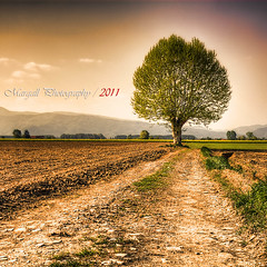 The tree in the Italian spring - HDR - Soligor 28mm f2,8 m42 (Margall photography) Tags: street tree photography spring 28mm perspective m42 marco solitary f28 hdr soligor galletto margall