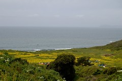 Point Reyes National Seashore - Wildcat Camp Photo