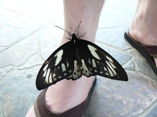 Butterfly and Martien's foot