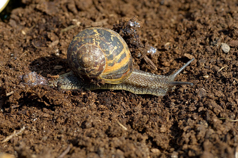 10 - Let's have a look to see which snails are already attracting big bets. There's little surprise that Hercules, who was a very tidy winner on his Festival debut last year, is as short as 2-1 in some places...