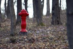 Hydrant i skogen - Foto: Ivo Berg