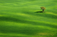 Solitude II (Philipp Klinger Photography) Tags: italien flowers trees light shadow italy cloud mountain flower color colour tree green nature colors field grass lines clouds landscape spring nikon san europa europe solitude italia alone loneliness colours zoom earth hill natur feld meadow wiese fresh line hills val solo tuscany lone tele lonely gras pienza patch toscana valdorcia philipp patches einsamkeit rolling rollinghills toskana einsam dorcia klinger orcia alleine quirico solitde sanquiricodorcia d700 dcdead