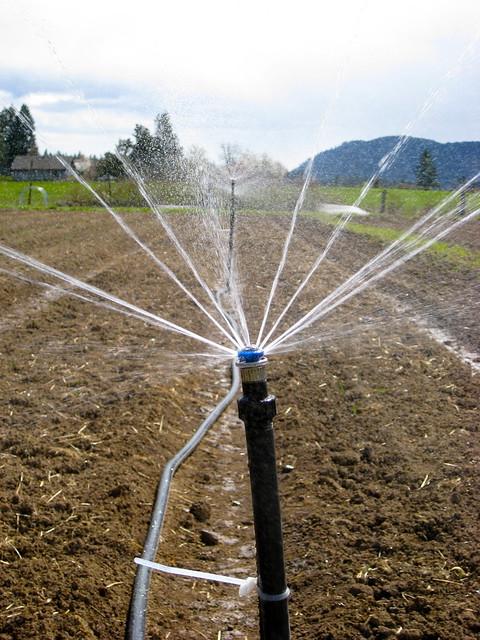 Irrigation Line 02