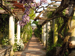 The Pergola (Laura Nolte) Tags: england london garden hampstead hampsteadheath wisteria pergola northlondon thepergola pergolaandhillgarden