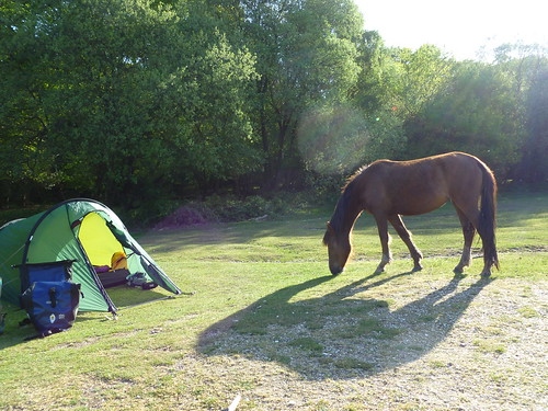 New Forest Camping 015