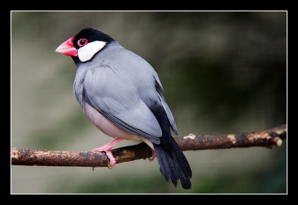 Lotherton bird garden