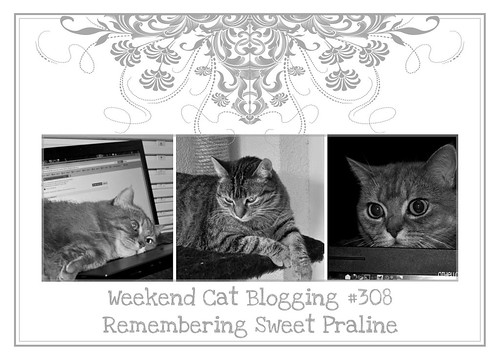 Weekend Cat Blogging #308