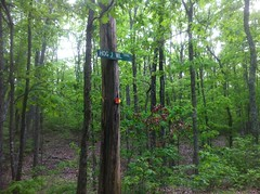 Hog Jowl Trail Sign