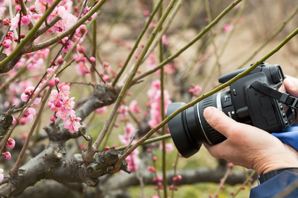 People and Plum blossoms