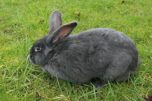 Cast Iron Farm Rabbits