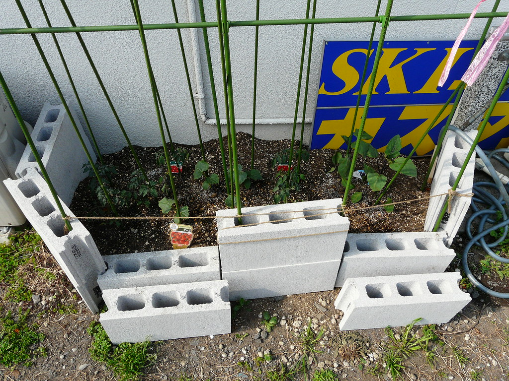 Tomato Garden in Blocks