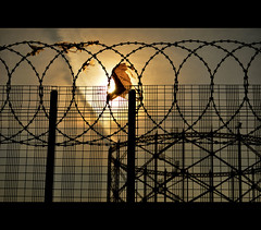 razor cut (pete ware) Tags: sunset metal fence ovals windy sharp loops gasworks pete torn seethrough cloth sunlit posts breeze medway razorwire ware gasometer gillingham nikond90 fencedfriday peteware