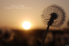 A Pocket Full Of Dandelion Sun (der.br) Tags: sunset sun macro germany deutschland lumix colorful warm sonnenuntergang stuttgart dandelion panasonic bblingen g1 romantic mm 60mm nikkor makro tones 60 farben boeblingen untergang lwenzahn pusteblume blowball sonnen objektiv romantisch mauren warme