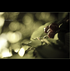 #88_2  ::  a casa mia (CiuPix) Tags: light italy nature fruits foglie italia afternoon natura uva frutta myhome luce umbria vite casamia pomeriggio brokeh ciligie ciupix canoneos7d lorenzopierini