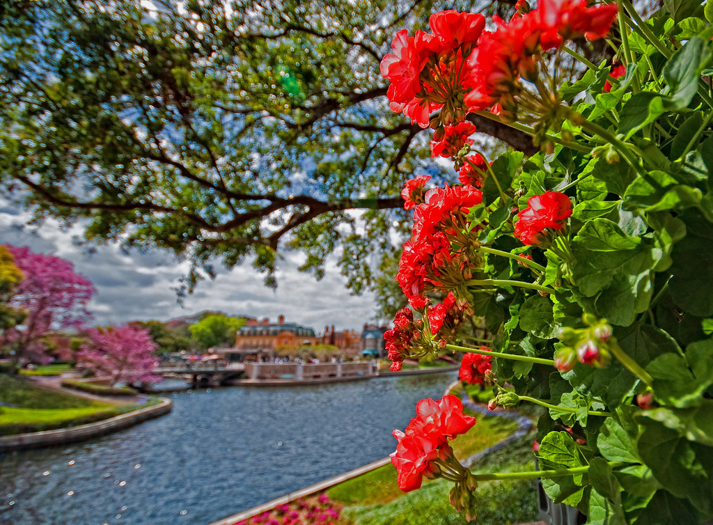 Flower and Garden and France