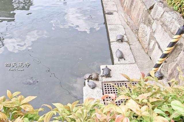 四天王寺的烏龜