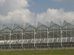Youngs Plant Farm (VWGC) Tags: al commercial mx twinwall