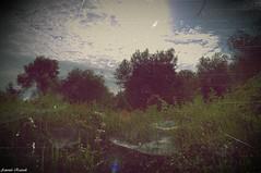 The Realm of Spiders (Glass [Antonio Ruzzoli]) Tags: io un sono ragazzo intelligente