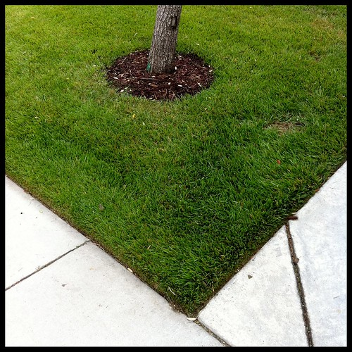 A WELL-MANICURED LAWN by BroAndDonna