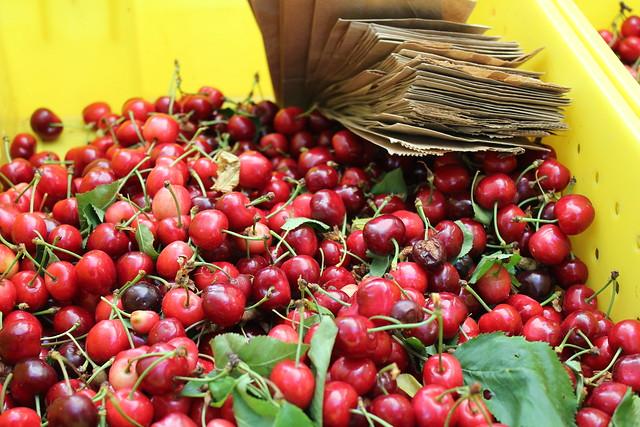 Organic Cherries IMG_0718