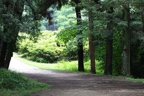 森の奥へ・・・