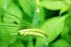(Angela Schlafmtze) Tags: park parco berlin verde nature berg natur natura land gras grn wald montagna tier fili citt bosco umwelt sfondo grashalm filiderba